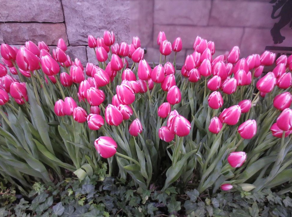 Canada's Top Home and Garden Events For Spring 2015